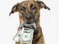 dog-holding-money